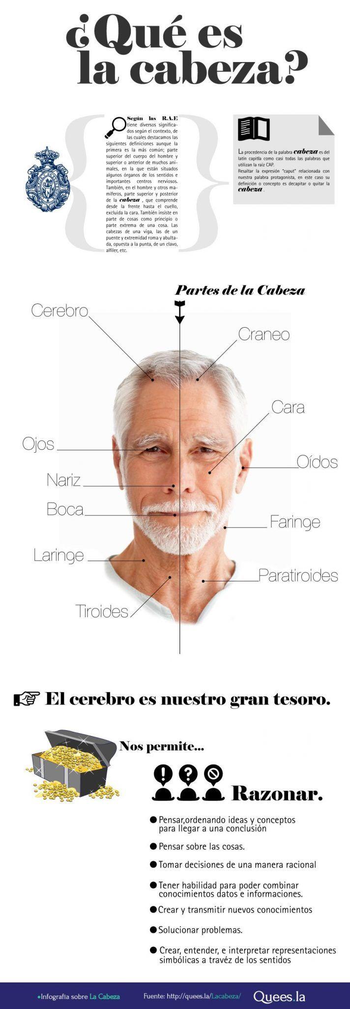 infografía cabeza