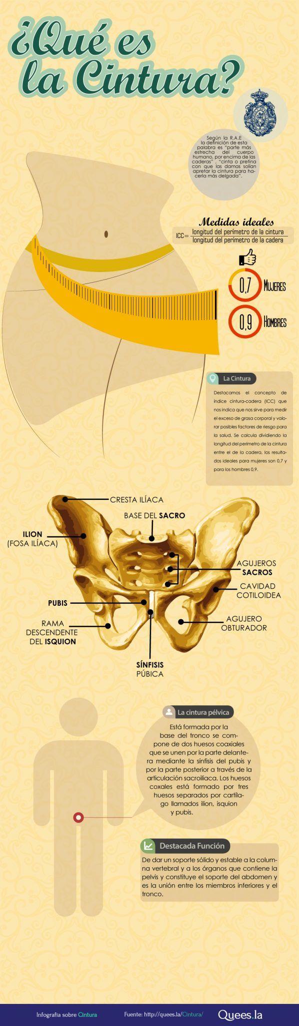 Infografía cintura