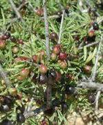 Qu es perenne definici n concepto y significado for Ejemplos de arboles de hoja perenne