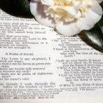¿Qué es salmo?