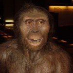 australopitecino
