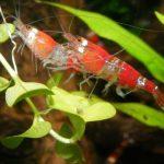 ¿Qué es acuicultural?