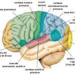 ¿Qué es somatosensorial?