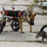 carrito para perro