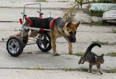 Qu es carrito para perro definici n concepto y for Carritos para perros