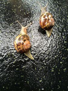 chicotear-los-caracoles-2-225x300.jpg
