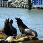 echar-la-foca-2-300x200.jpg