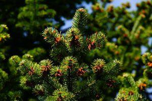 foliación-300x200.jpg