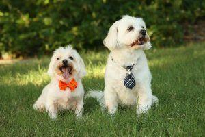 los-mismos-perros-pero-con-distinto-collar-300x200.jpg
