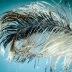 ¿Qué es pluma?