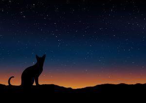 de-noche-todos-los-gatos-son-pardos-300x213.jpg