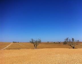 desertificación