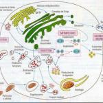 ¿Qué es metabolismo celular?