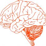 ¿Qué es sistema nervioso central?